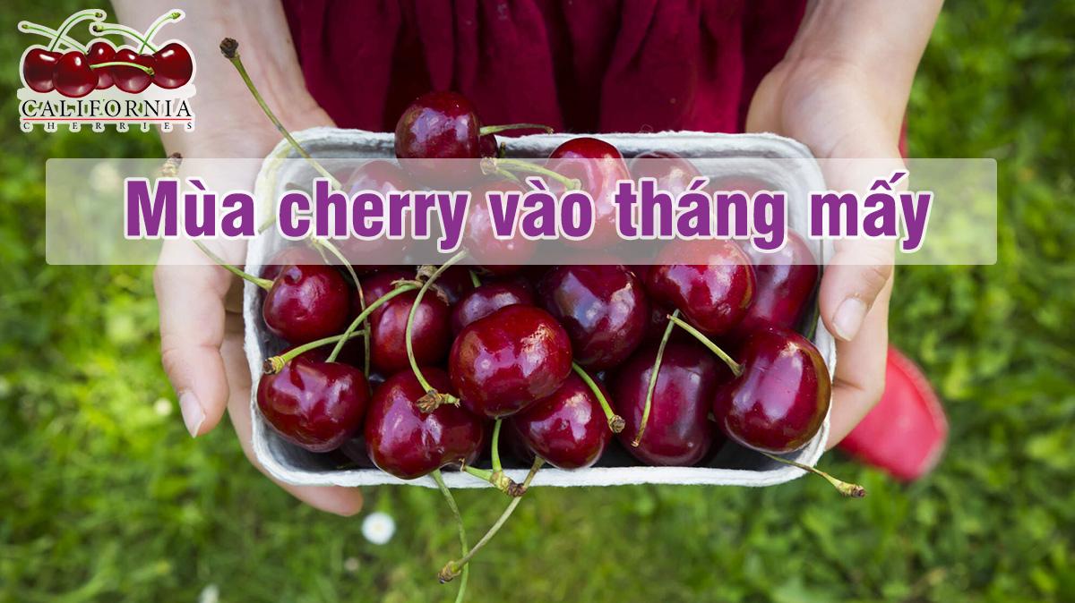 Mùa cherry vào tháng mấy