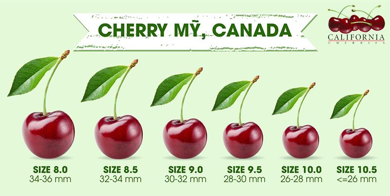 Cách tính size cherry