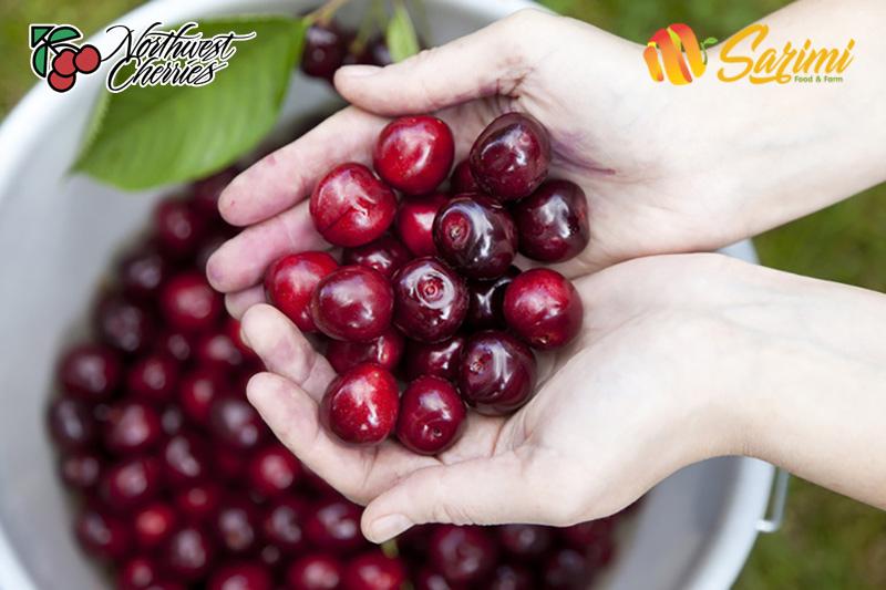 các loại cherry nhập khẩu